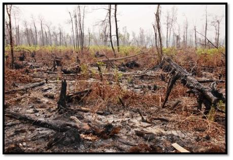 "Foto 1. Kebakaran Hutan Lindung Gambut ""Liang Anggang"" tahun 2015"