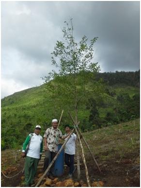 Tanaman RI 1 Ir. H. Joko Widodo dengan jenis gaharu (Aquilaria malaccensis) di Tahura Sultan Adam