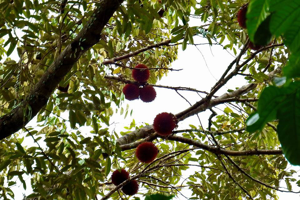 sumber foto dari www.blacan.com